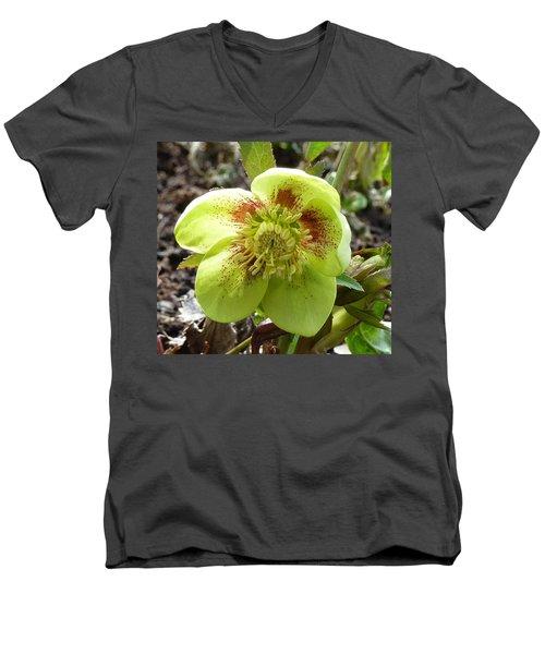 Hellebore Men's V-Neck T-Shirt