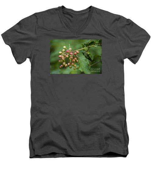 Men's V-Neck T-Shirt featuring the photograph High Bush Cranberry 20120703_106a by Tina Hopkins