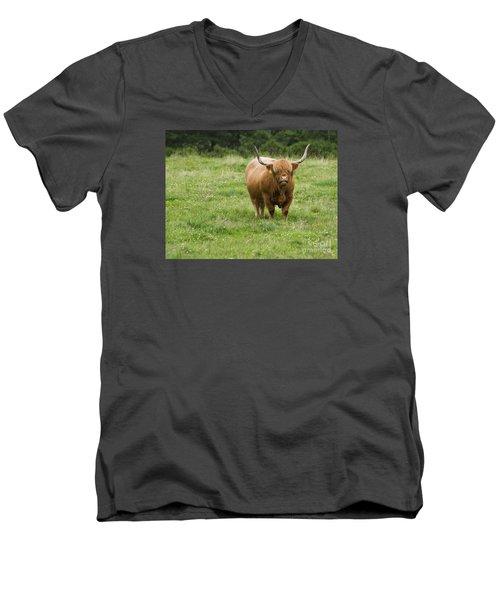 Highland Cattle Men's V-Neck T-Shirt by Diane Diederich
