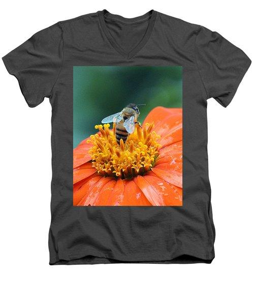 Honeybee On Orange Flower Men's V-Neck T-Shirt