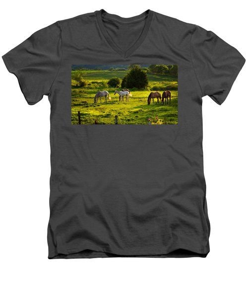 Horses Grazing In Evening Light Men's V-Neck T-Shirt