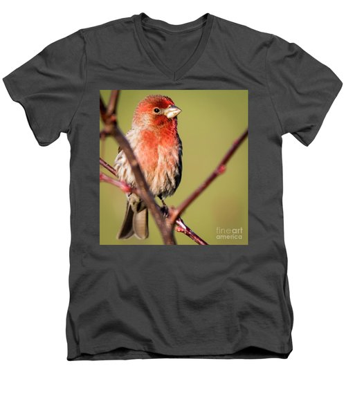 Men's V-Neck T-Shirt featuring the photograph House Finch In Full Color by Ricky L Jones