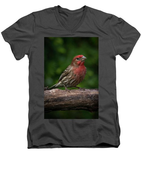House Finch Men's V-Neck T-Shirt by Kenneth Cole