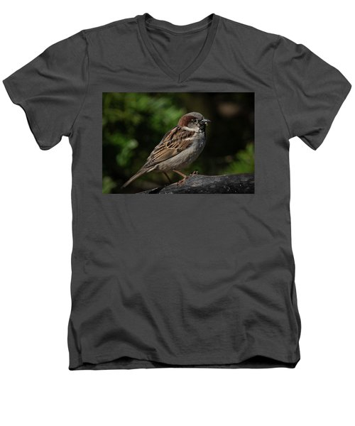 House Sparrow 2 Men's V-Neck T-Shirt by Kenneth Cole