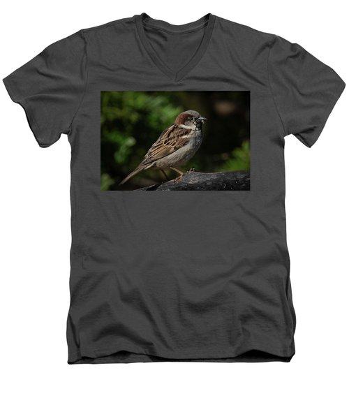 House Sparrow 2 Men's V-Neck T-Shirt
