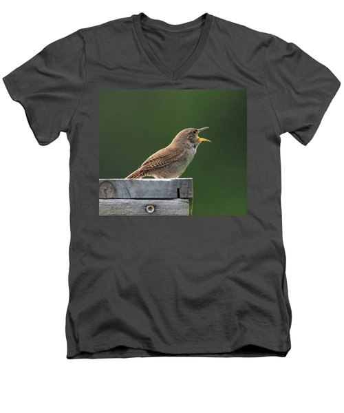 House Wren Stony Brook New York Men's V-Neck T-Shirt by Bob Savage