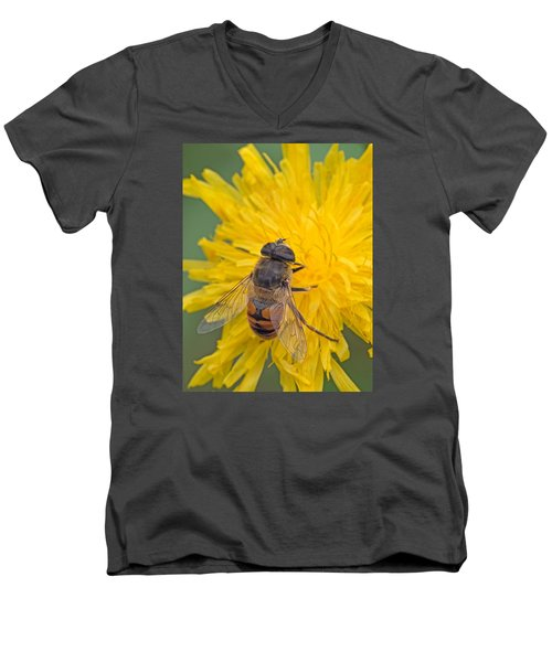 Hover Fly On Sow Thistle Men's V-Neck T-Shirt