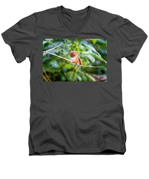 Humming Bird On Stick Men's V-Neck T-Shirt