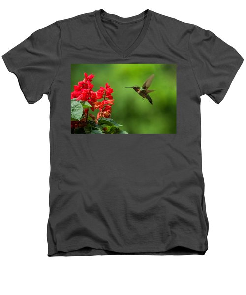 Hummingbird And Scarlet Sage Men's V-Neck T-Shirt