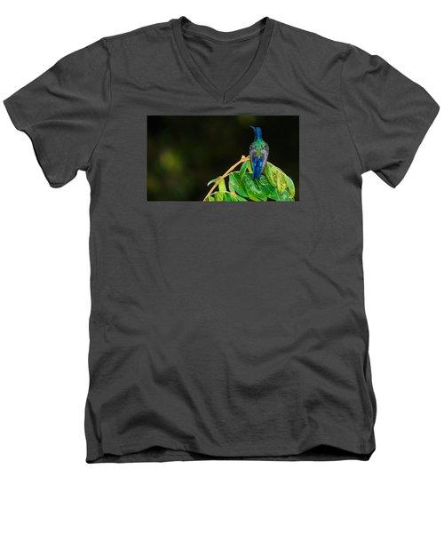 Hummingbird Men's V-Neck T-Shirt by Daniel Precht