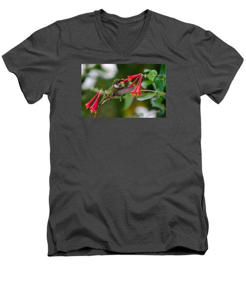 Hummingbird Feeding Men's V-Neck T-Shirt