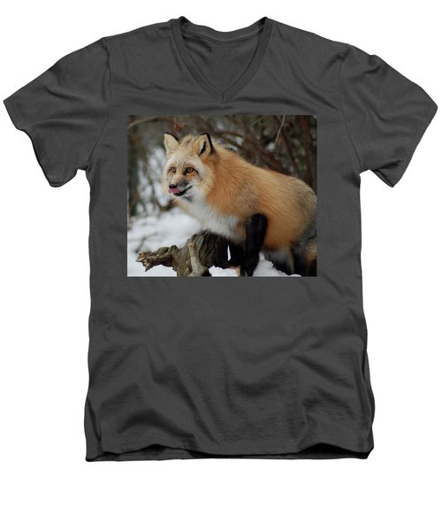 Men's V-Neck T-Shirt featuring the photograph Hungry Fox by Richard Bryce and Family
