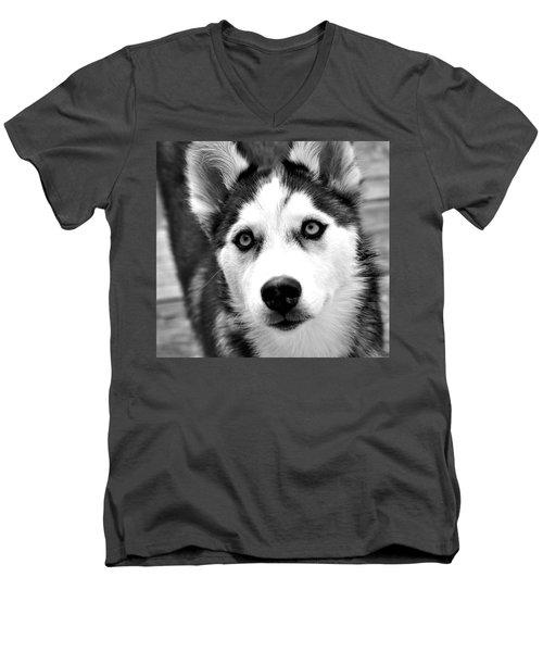 Husky Pup Men's V-Neck T-Shirt