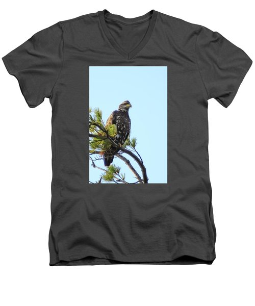 Immature Bald Eagle 1 Men's V-Neck T-Shirt