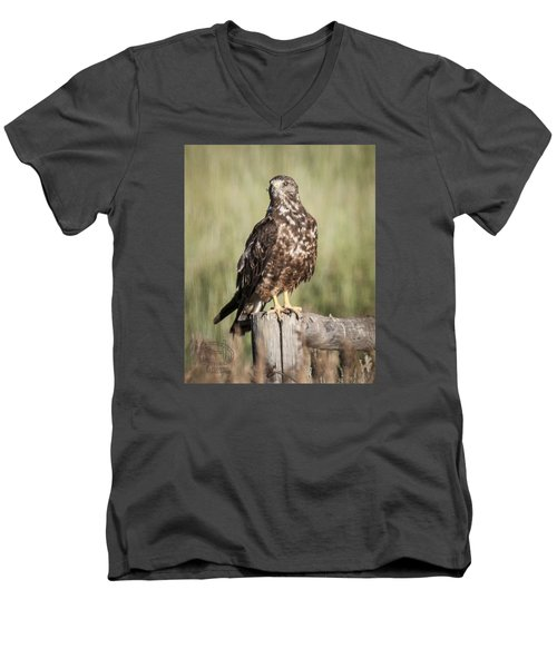 Men's V-Neck T-Shirt featuring the photograph Immature Northern Harrier by Daniel Hebard