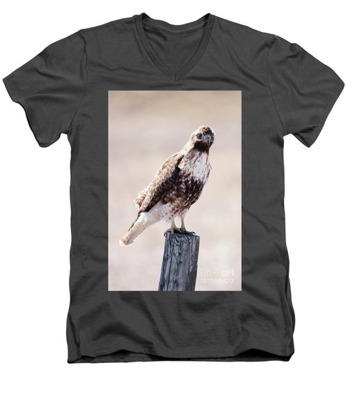 Immature Red Tailed Hawk Men's V-Neck T-Shirt
