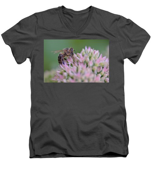 In Search Of Nectar Men's V-Neck T-Shirt by Janet Rockburn