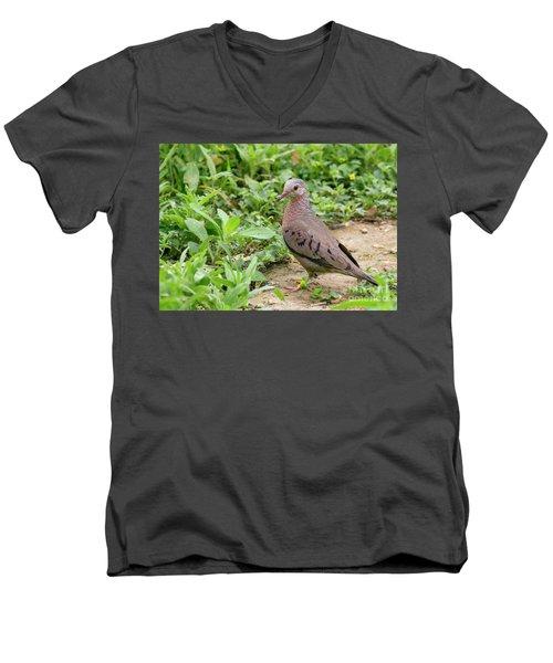 Inca Dove Men's V-Neck T-Shirt