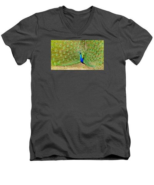 Indian Peacock Men's V-Neck T-Shirt by Dan Miller