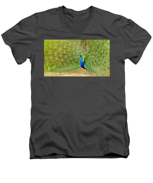 Indian Peacock Men's V-Neck T-Shirt