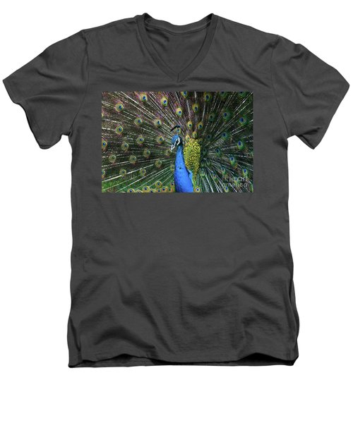 Indian Peacock With Tail Feathers Up Men's V-Neck T-Shirt