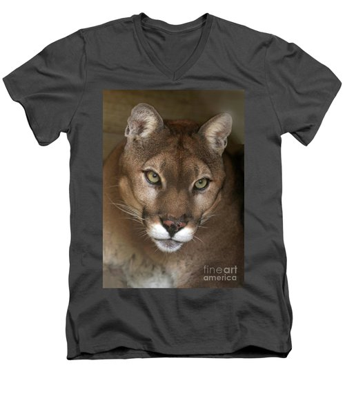 Intense Cougar Men's V-Neck T-Shirt