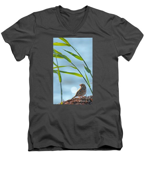 Ipswich Sparrow Men's V-Neck T-Shirt