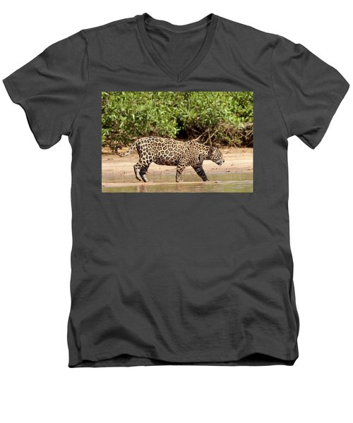 Jaguar Walking On A River Bank Men's V-Neck T-Shirt