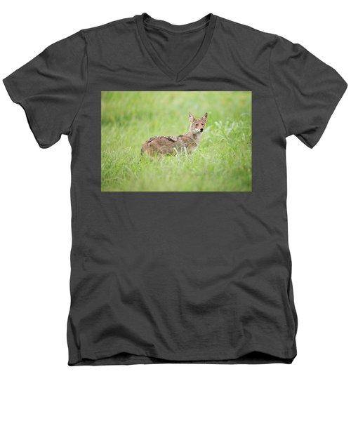 Juvenile Coyote Men's V-Neck T-Shirt