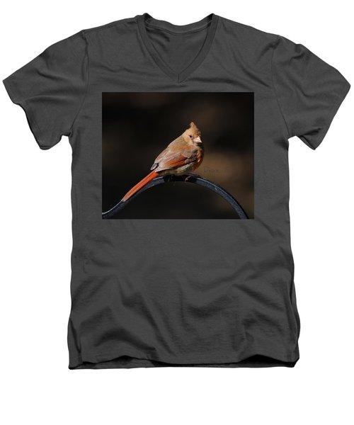 Juvenile Male Cardinal Men's V-Neck T-Shirt by Diane Giurco