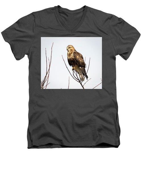 Juvenile Rough-legged Hawk  Men's V-Neck T-Shirt