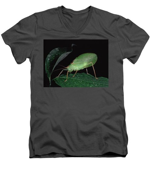 Katydid At Night Men's V-Neck T-Shirt