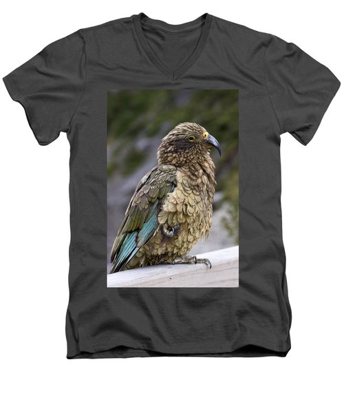 Kea Bird Men's V-Neck T-Shirt by Sally Weigand
