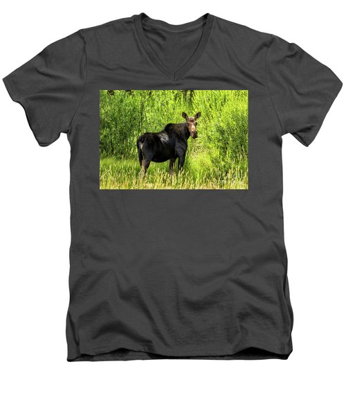 Keep Your Distance Wildlife Art By Kaylyn Franks Men's V-Neck T-Shirt