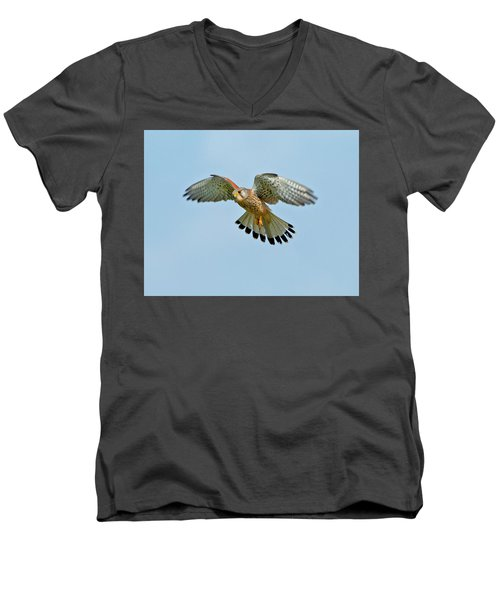 Men's V-Neck T-Shirt featuring the photograph Kestrel In The Wind . by Paul Scoullar