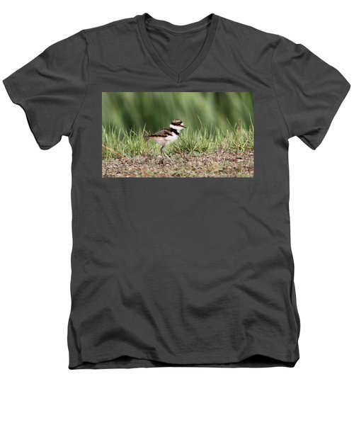 Killdeer - 24 Hours Old Men's V-Neck T-Shirt by Travis Truelove