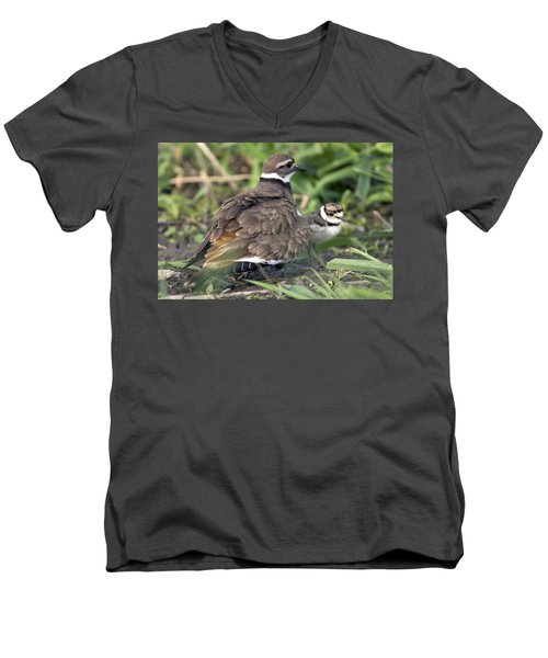 Killdeer With Chicks Men's V-Neck T-Shirt by Craig Strand