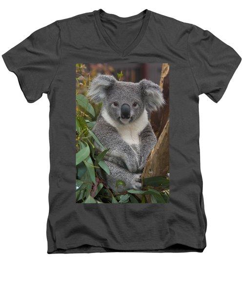 Koala Phascolarctos Cinereus Men's V-Neck T-Shirt by Zssd