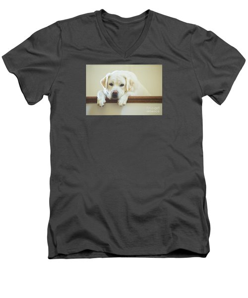 Labrador Retriever On The Stairs Men's V-Neck T-Shirt by Diane Diederich
