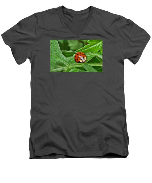 Lady Bug Men's V-Neck T-Shirt