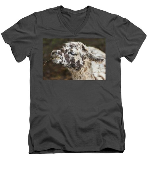 Lady Llama Men's V-Neck T-Shirt