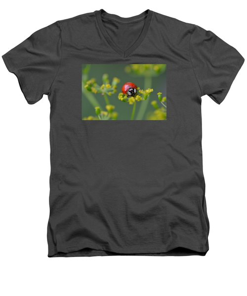 Ladybug In Red Men's V-Neck T-Shirt