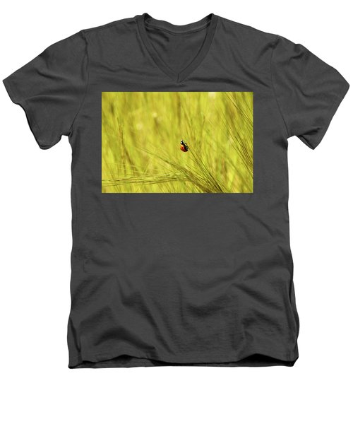 Ladybug In A Wheat Field Men's V-Neck T-Shirt