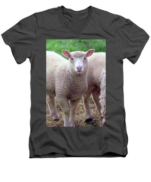 Lamb Men's V-Neck T-Shirt
