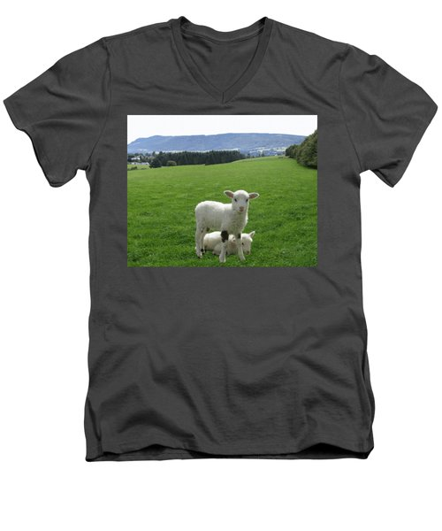 Lambs In Pasture Men's V-Neck T-Shirt by Dominic Yannarella