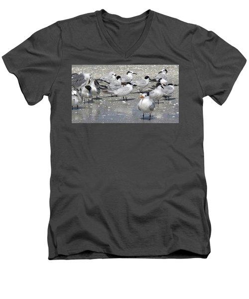 Least Terns Men's V-Neck T-Shirt by Melinda Saminski