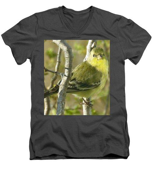 Lesser Goldfinch 1 Men's V-Neck T-Shirt
