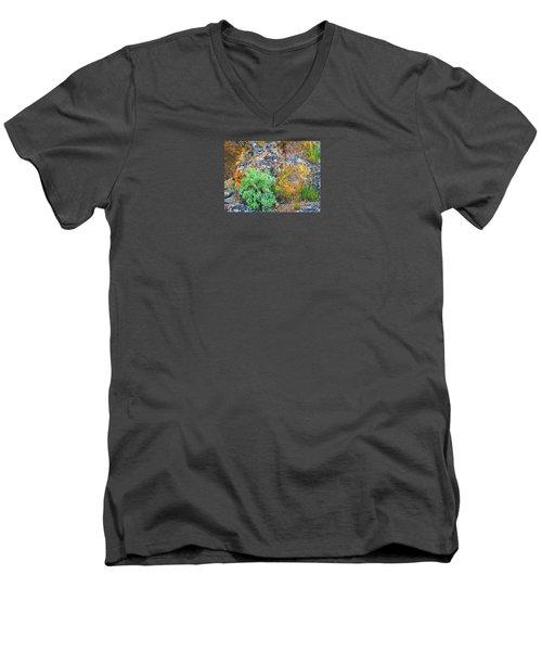 Lichen Rainbow   Men's V-Neck T-Shirt by Michele Penner