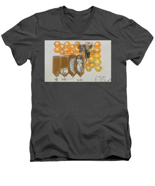 Life Cycle Of A Bee  Men's V-Neck T-Shirt by Francine Heykoop