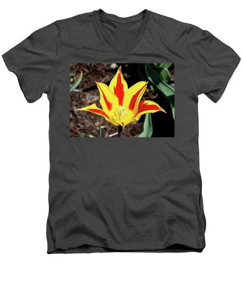 Lily Tulip Men's V-Neck T-Shirt